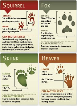 animal track identification